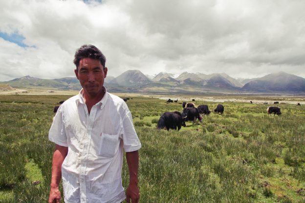 Conductor tibetano yak