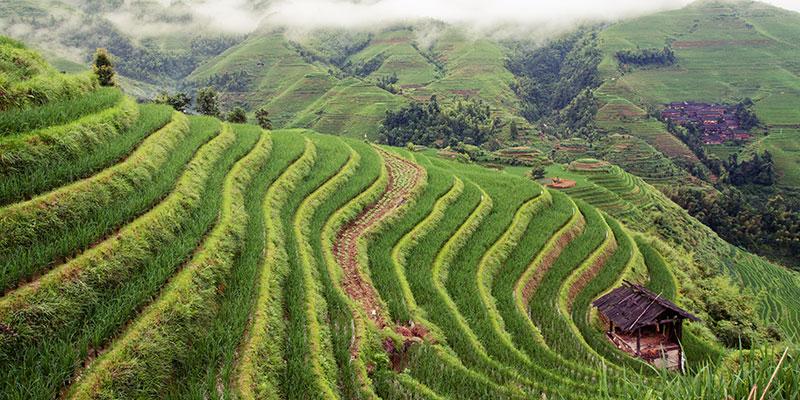 dazhai-longsheng-ping-an-terrazas-arroz